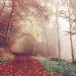 Herbstdepression vorbeugen – Tipps & Tricks